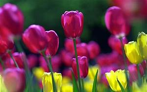 wallpapers: Spring Flowers Wallpapers