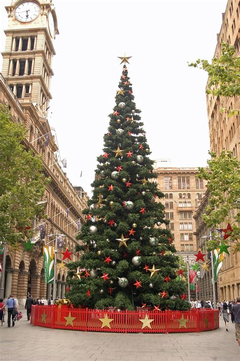 artificial christmas trees sydney in martin place the dictionary of sydney