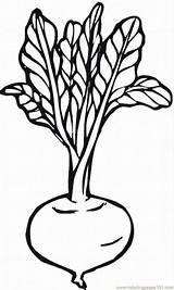 Coloring Beetroot sketch template