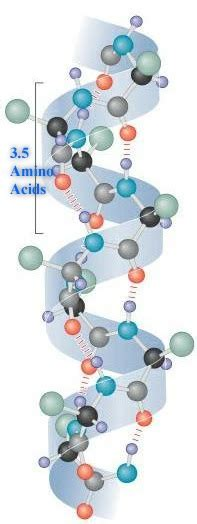 difference between alpha helix and beta pleated sheet