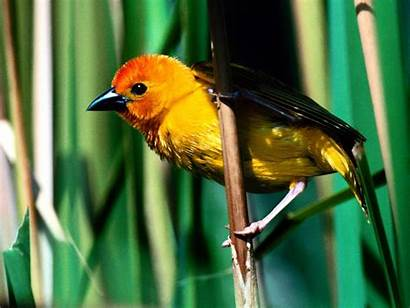Bird Yellow Nice Birds Wallpapers Walls