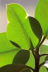 Büro Pflanzen Pflegeleicht : diese pflanzen eignen sich besonders f r ihr b ro ~ Michelbontemps.com Haus und Dekorationen
