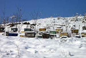 Was Machen Schmetterlinge Im Winter : was machen bienen im winter bee careful ~ Lizthompson.info Haus und Dekorationen