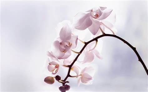 Download Wallpapers Orchids, Light Pink Orchid, Tropical