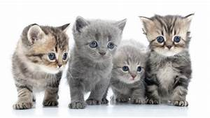 Grundstück Kaufen Was Ist Zu Beachten : katzen kaufen was sollte man beachten ~ Markanthonyermac.com Haus und Dekorationen