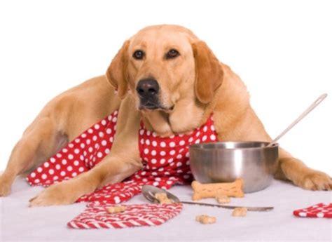 cuisine pour chien gateaux chien a faire soi meme fanimo