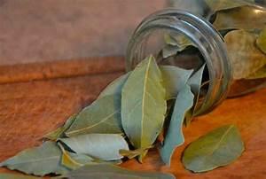 Помогает ли лавровый лист при псориазе