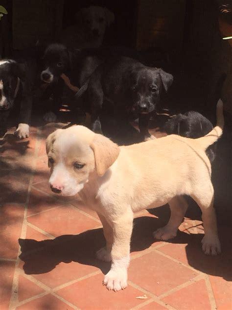 Cerco In Regalo - canili torino cuccioli image192