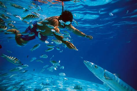 snorkeling in okinawa youtube