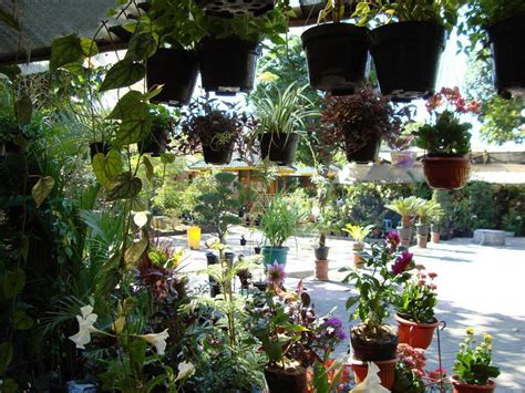 inilah rekomendasi pasar satwa  tanaman hias yogyakarta