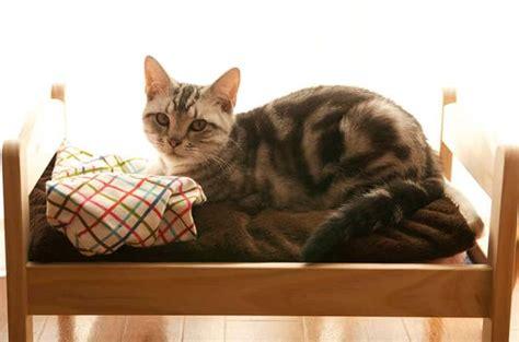 au japon des proprietaires de chats transforment  lit