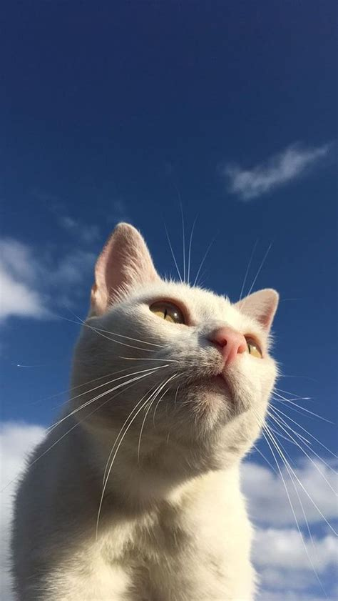 view 16 gambar wallpaper kucing comel