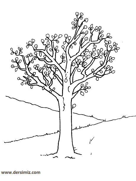 Boş Ağaç Gövdesi şablonu Resimlere Göre Ara Red