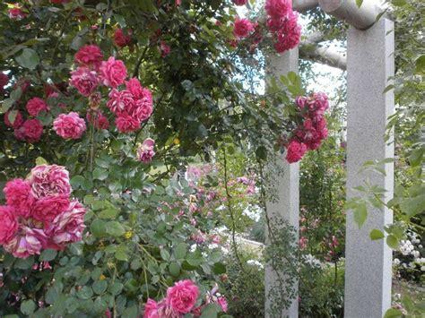 Garten Und Landschaftsbau Rosengarten by Rosengarten