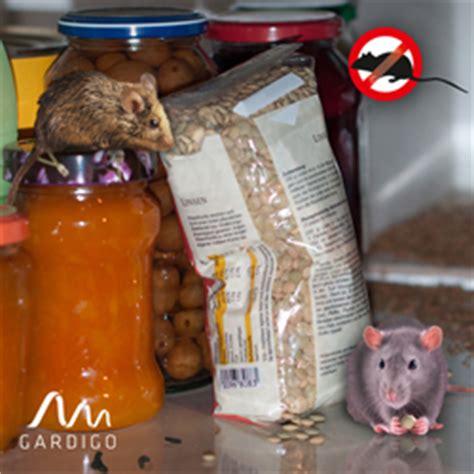 Mäuse Im Haus Was Tun by M 228 Use Im Sp 228 Tsommer Und Herbst Bek 228 Mpfen Mit Gardigo