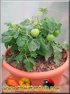 Quand Planter Les Tomates Cerises : la culture des tomates en pots ~ Farleysfitness.com Idées de Décoration