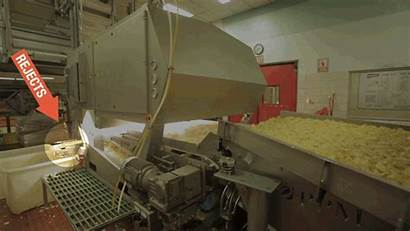 Potato Chips Production Factory Chip Eating Being