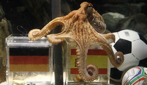 cuisiner tentacules de poulpe tentacules en berne la triste mort de paul le poulpe