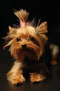 Comment Choisir Un Four : comment choisir son chien nos conseilles en 45 photos ~ Melissatoandfro.com Idées de Décoration