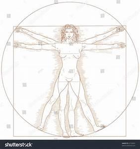 Vitruvian Woman Illustration Stock Illustration 62728963 ...