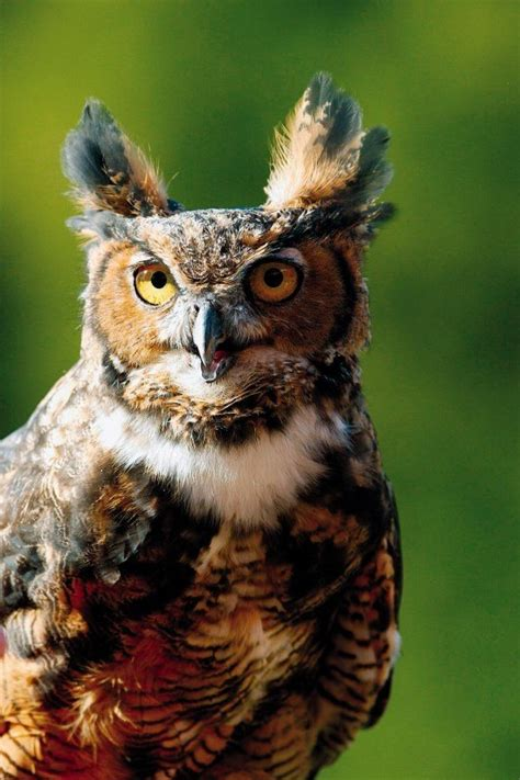 touched by owls wild birds unlimited wild birds unlimited