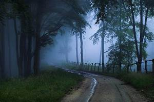 Mist, Forest, Trees, Nature, Wallpapers, Hd, Desktop, And