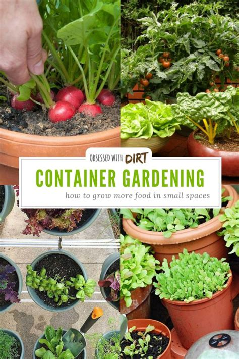 Best 25+ Container Vegetable Gardening Ideas On Pinterest