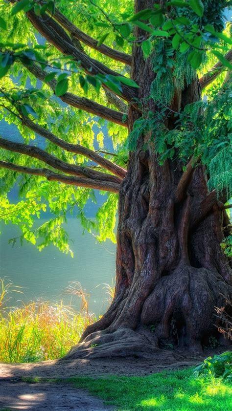 natur fruehling gruenen baum wald iphone xgs