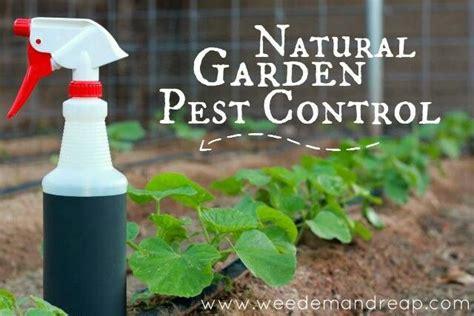 Natural Pest Control For Garden Smalltowndjscom