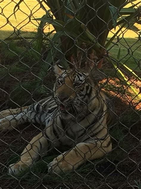 The new Mike VII, previously known as Harvey. 8/21/17 ...