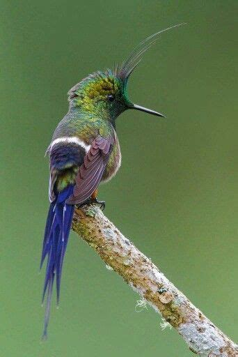 hummingbirds wire and i am on pinterest