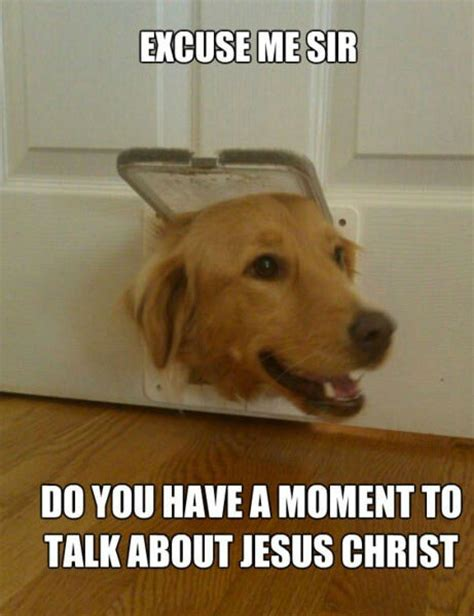 The Dog Meme - funny dog memes i top 50 of all time i world wide interweb