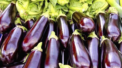 comment cuisiner des aubergines facilement aubergine comment la planter et en faire la culture