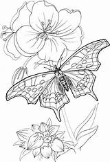 Coloring Pages Butterfly Patterns Yarn Adults Printable Tsgos sketch template