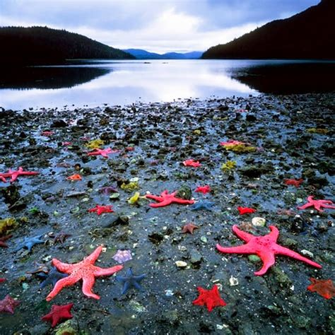 The Nicest Pictures Starfish Colony West Coast Of New