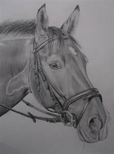 Pferde Portrait Natur Bleistiftzeichnung Tiere