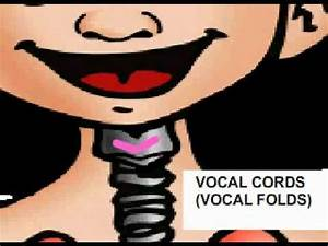 How the voice works (Kids) - YouTube
