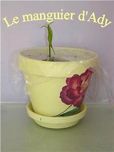 Planter Noyau Mangue : planter des graines et des p pins page 42 au jardin ~ Melissatoandfro.com Idées de Décoration