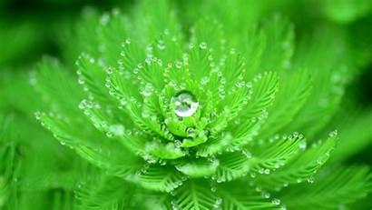 Nature Water Plants Leaves Drops Macro Closeup