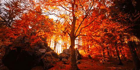 tempat  pemandangan musim gugur terindah  dunia