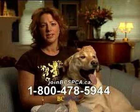 sarah mclachlan animal cruelty video youtube