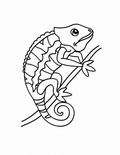 Chameleon Coloring Pages Changing Drawing Line Place