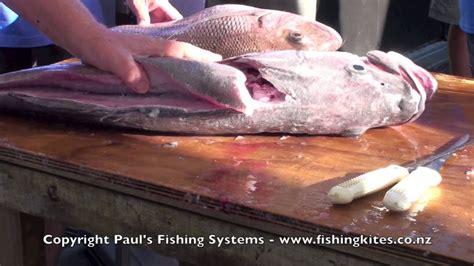 bass wreckfish grouper hapuku
