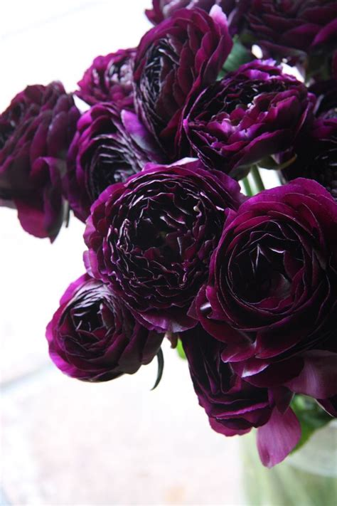 dark purple flowers ideas  pinterest dark