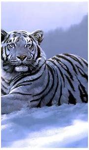 Free Download White Tiger Backgrounds   PixelsTalk.Net