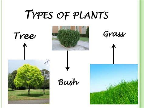 types of plants social natural science english year 2 seneca natural