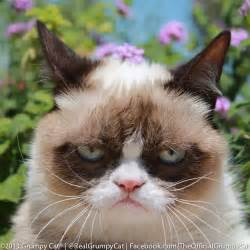 what of cat is grumpy cat petition bring grumpy cat to western michigan