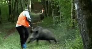 Dangerous Bacon: Top 10 Wild Boar Attacks [VIDEO] - Wide ...