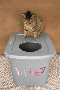 how to litter box a cat how to stop my cat from tracking litter everywhere