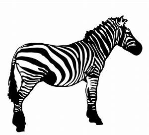 Zebra Cartoon Pictures - Cliparts.co